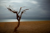 Beach Tree thumbnail